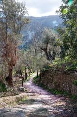 Walking path Soller, Mallorca, Balearic islands, Spain