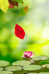 falling autumn leaves and a lotus flower on the water