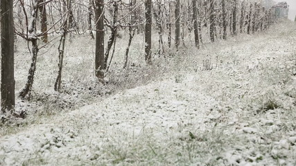 Snowing in the Countryside