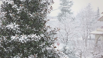 Trees Being Covered by Snow