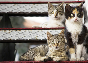 Three Cats Posing