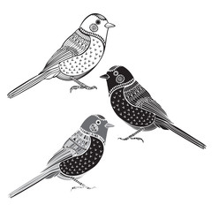 Set of birds isolated on white background. Hand drawn vector mon