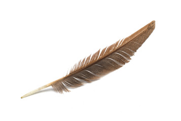 Brown feather on a white background. Photo.