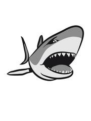 Shark fish angry sea