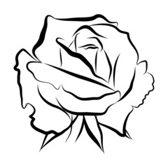 Sketch line drawing of rose