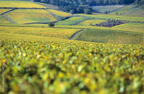 Spoed canvasdoek 2cm dik Cultuur Vignobles du Chablis en Automne