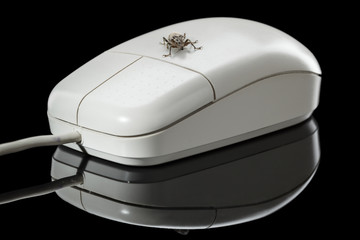 Bug and computer mouse on reflective plate