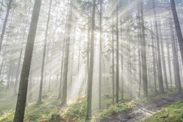 Light streaks in the foggy forest