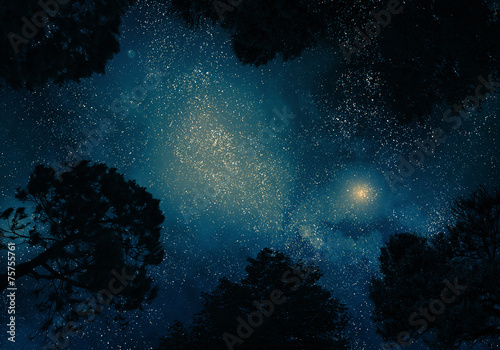 Starry sky through trees - 75755761