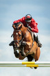 Equestrian - 75758708