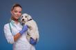 Vet holding a cute dog - 75764188