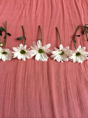White daisies on a salmon colored blanket