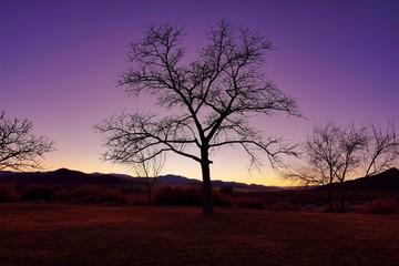 twilight over barren trees