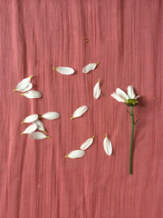 Scattered  white flower petals