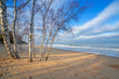 Beautiful beach with birch trees at Baltic Sea, Poland