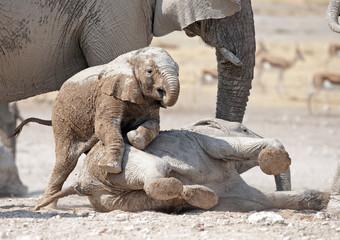young elephants playing.