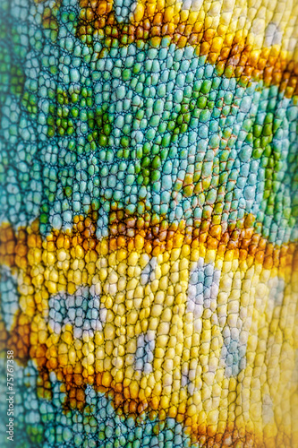 Close up of Four-horned Chameleon skin background, - 75767358