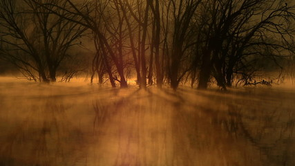 stained dawn mists