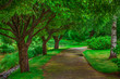 canvas print picture - Beautiful walkway