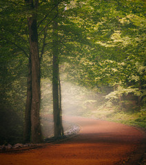 Beautiful forest along the pathway during misty day