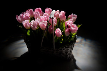 Pink tulips in the basket in studio on black background