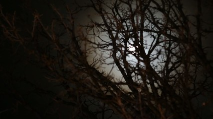 Time lapse of full moon rising behind barren tree