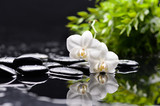 white three orchid with black stones and green plant