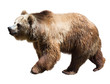 Bear. Isolated  over white - 75778588