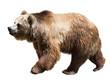 Leinwanddruck Bild - Bear. Isolated  over white