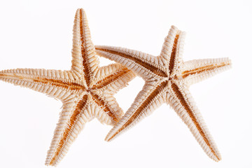 some of sea stars isolated on white background