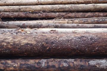 Spruce logs background