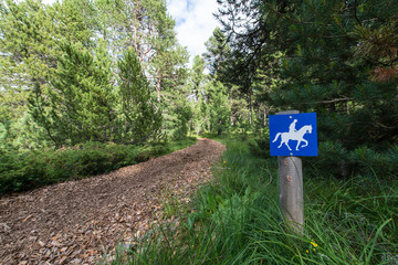 trail for horses