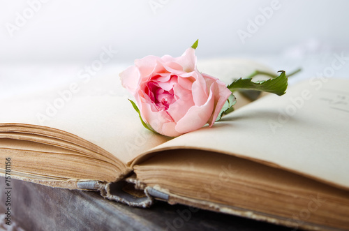 canvas print picture pink rose on an open old book
