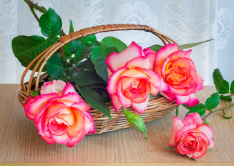 Beautiful large roses with leaves in a wicker basket on the tabl