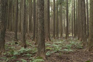 Cypress Beautiful wood