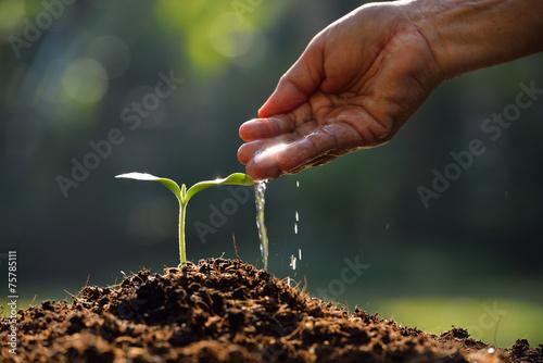 Papiers peints Vegetal Farmer's hand watering a young plant