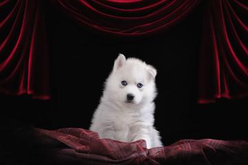 щенок на сцене