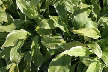 grass green leafs