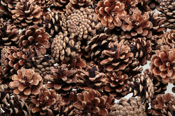 Background  of dried natural pine cones.
