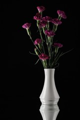 Purple carnations in white vase black bacground