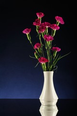 Purple carnations in white vase degrade blue and black bacgro