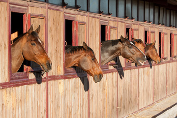Horses in their stable