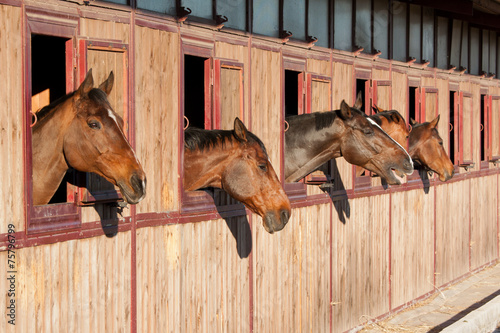 Staande foto Paarden Horses in their stable