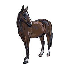Elegance horse on white background