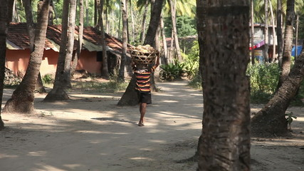 Indian man carries a basket of coconuts on his head
