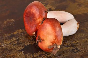 Boletus edulis mushroom on wooden board background