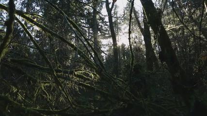 Pacific Northwest Rainforest Moss dolly shot
