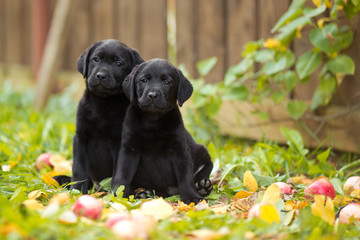 два близнеца