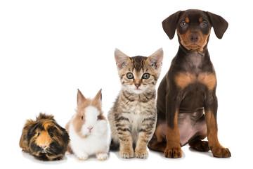 Haustiere - Pets