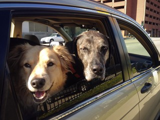 Two Happy Dogs at Travel Destination